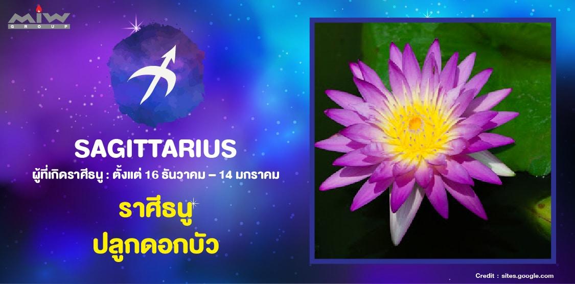 12. ราศีธนู ดอกบัว - ไม้ดอกไม้ประดับ ประจำ 12 ราศี ปลูกแล้วชีวิตดี