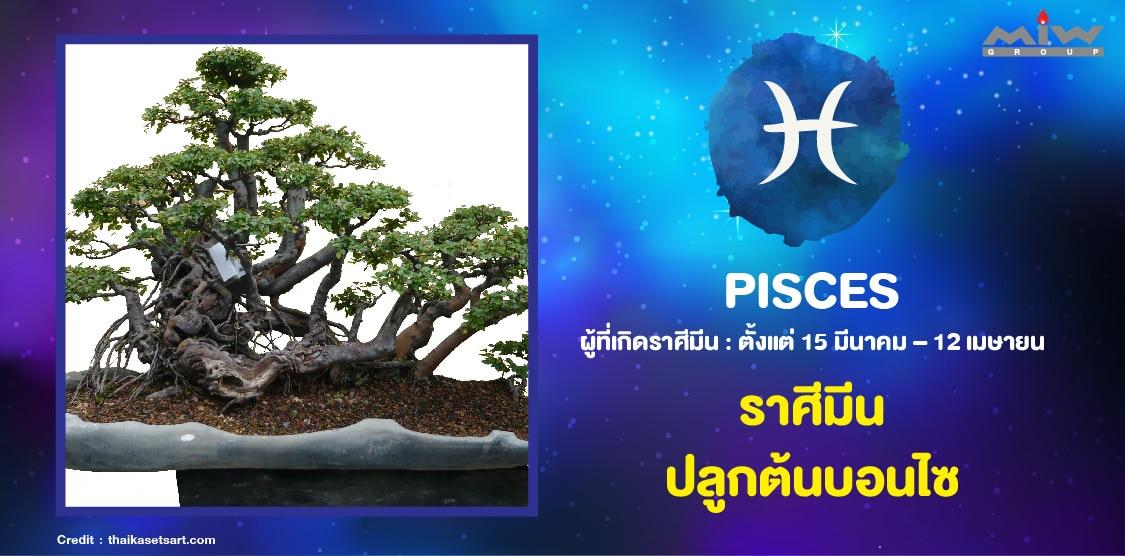 3. ราศีมีน ต้นบอนไซ - ไม้ดอกไม้ประดับ ประจำ 12 ราศี ปลูกแล้วชีวิตดี
