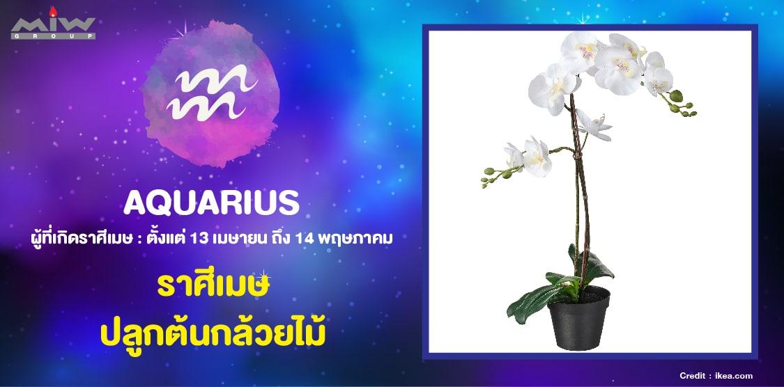 4. ราศีเมษ ต้นกล้วยไม้ - ไม้ดอกไม้ประดับ ประจำ 12 ราศี ปลูกแล้วชีวิตดี