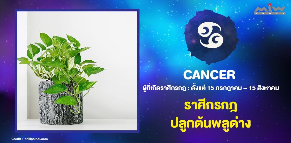 7. ราศีกรกฎ ต้นพลูด่าง - ไม้ดอกไม้ประดับ ประจำ 12 ราศี ปลูกแล้วชีวิตดี