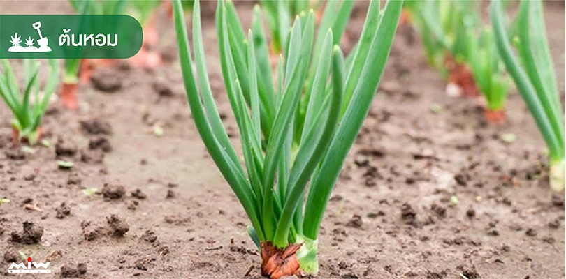 vegetables 3 - ไอเดียปลูกผักง่าย ๆ สไตล์คนกักตัว