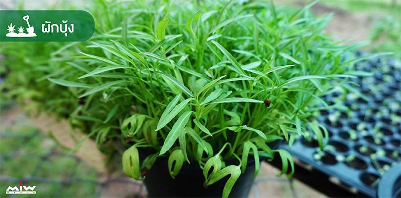 vegetables 5 - ไอเดียปลูกผักง่าย ๆ สไตล์คนกักตัว