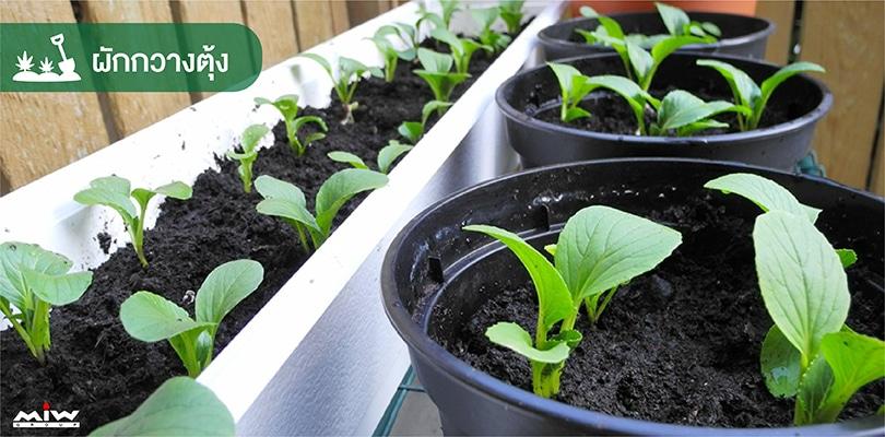 vegetables 6 - ไอเดียปลูกผักง่าย ๆ สไตล์คนกักตัว