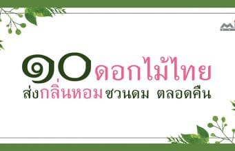 Website 10 Thai flowers that smell good 1 341x220 - Home